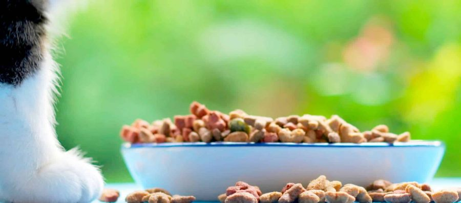 Nourrir son chat grâce à une alimentation bio