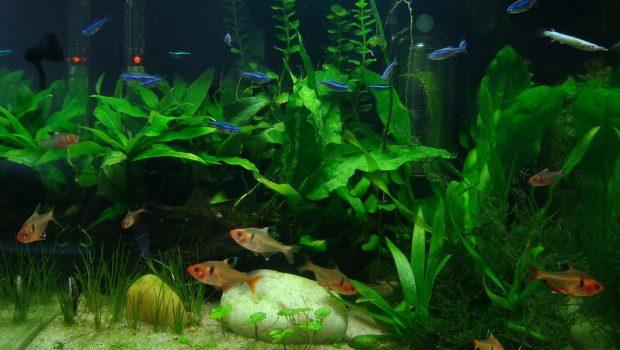 Changer l'eau de son aquarium