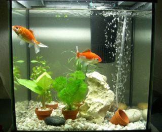 Filtration de l'aquarium : comparatif des filtres
