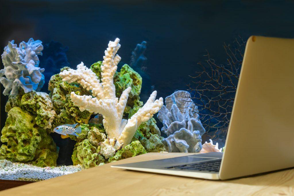 aquarium en fond du bureau