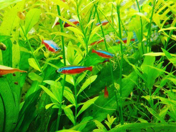 L'eau de l'aquarium : augmenter ou baisser le pH et la dureté
