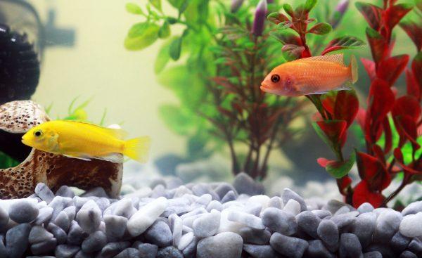 Comment nettoyer et entretenir son aquarium ?
