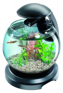aquarium rond poisson