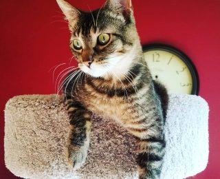 L'arbre à chat : conseils et infos