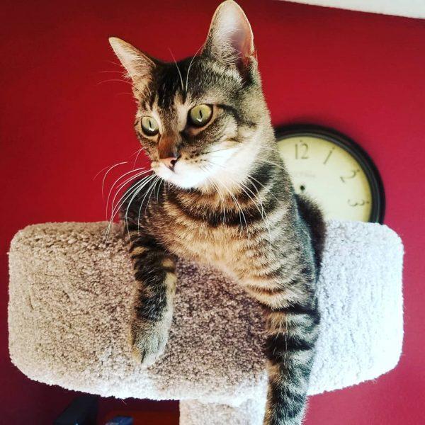 Quel arbre à chat choisir ?