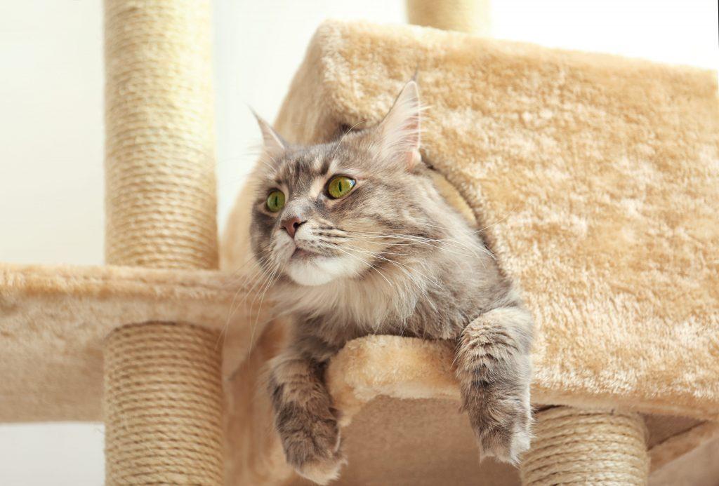 Chat dans son arbre à chat gros plan
