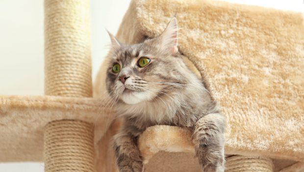Habituer le chat à utiliser l'arbre à chat
