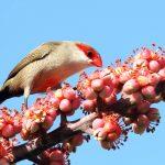 Quelles graines pour oiseaux exotiques ?