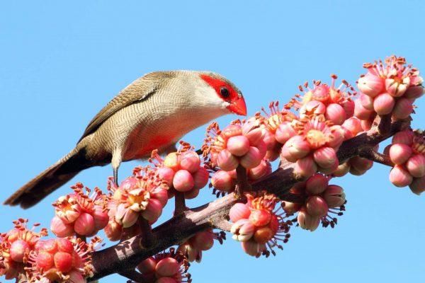 Quelles graines pour nourrir les oiseaux exotiques ?