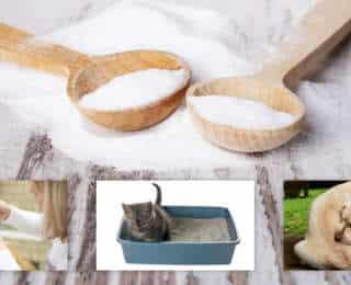 Bicarbonate de soude : 14 utilisations astucieuses