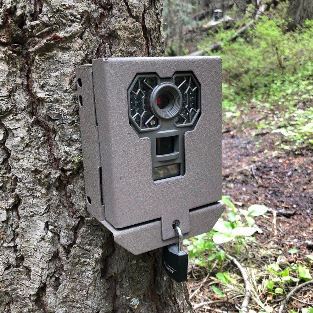 Caméra de chasse attachée à un arbre