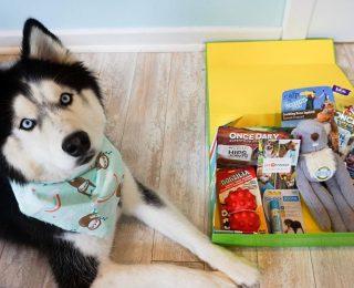 Box et coffrets pour chiens : conseils pour bien les choisir