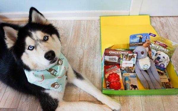 Box et coffrets pour chiens : que valent-ils ?