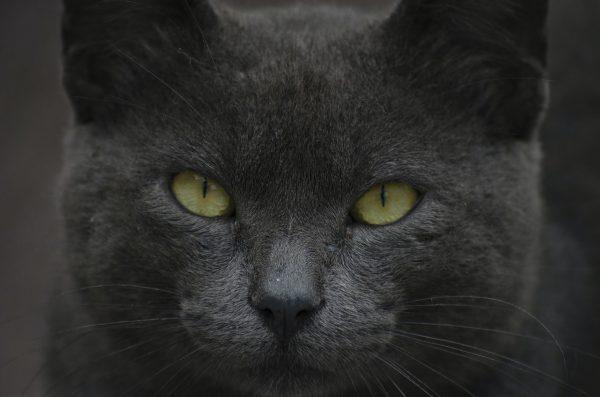 Les chats voient-ils dans le noir ?