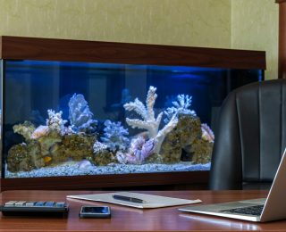 Un aquarium tropical au bureau : comment l'installer ?