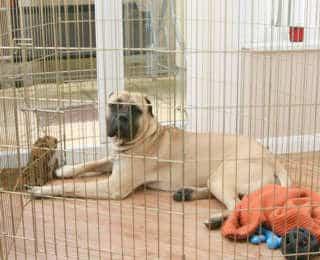 La cage du chien