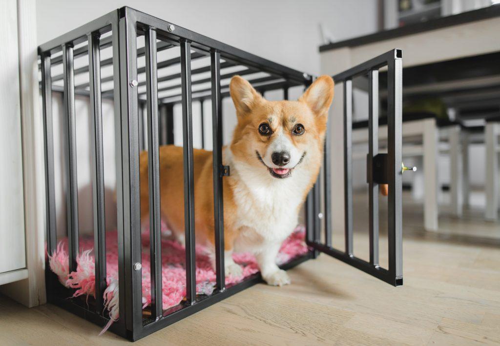 cage d'intérieur pour chien avec barreaux