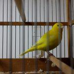 Cage et volière pour oiseaux : laquelle choisir ?