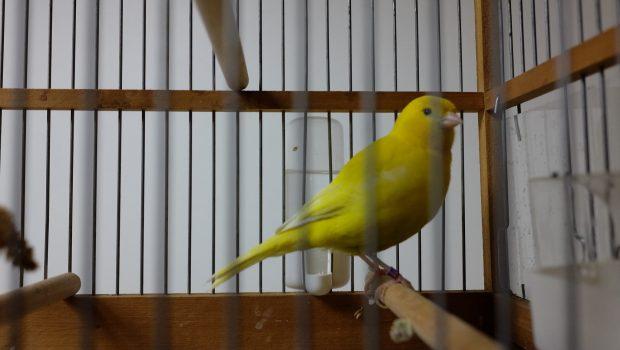 Choisir une cage ou une volière pour des oiseaux exotiques ?