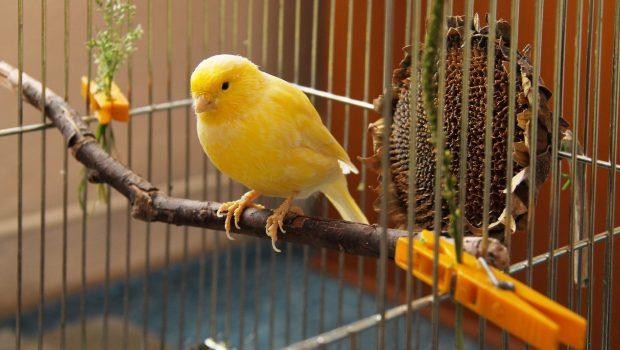 Quelle cage choisir pour son oiseau ?