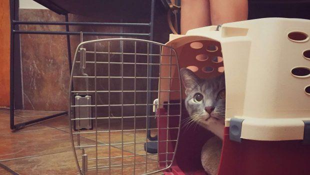 Comment bien choisir la cage de son chat ?