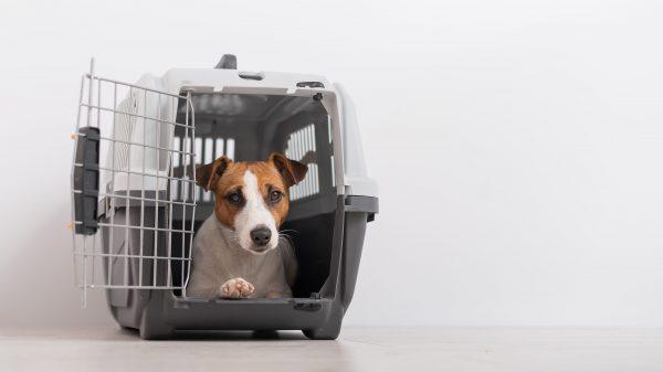 Quelle cage et sac de transport pour voyager avec son chien ?