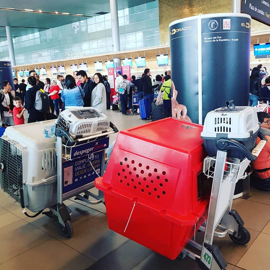 aéroport chien cage