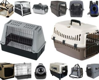 Cage de transport pour chien : comment la choisir ?