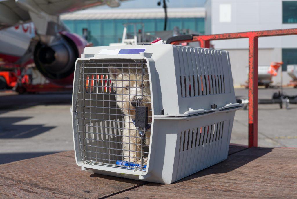 Chien placé dans une cage IATA à l'aéroport