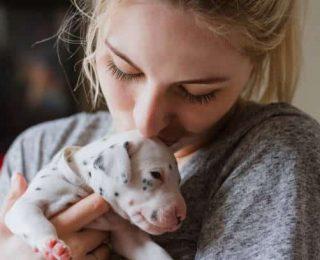 Devenir éleveur animalier : 7 choses à savoir