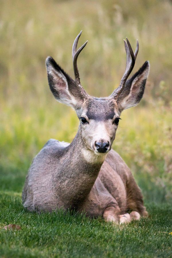 Photographier les animaux : matériel, conseils et techniques