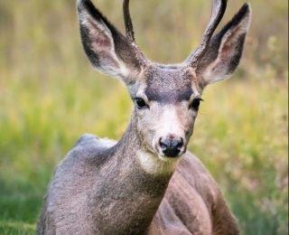 Photographie animalière : matériel, conseils et techniques