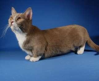 10 races de chats insolites à découvrir