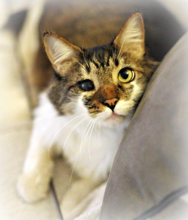 Le chat qui urine partout : causes et traitement