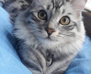 L'insuffisance rénale chez le chat – Problèmes de reins