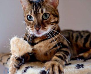5 fausses idées reçues sur les chats