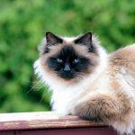 7 races de chats tendance à connaître