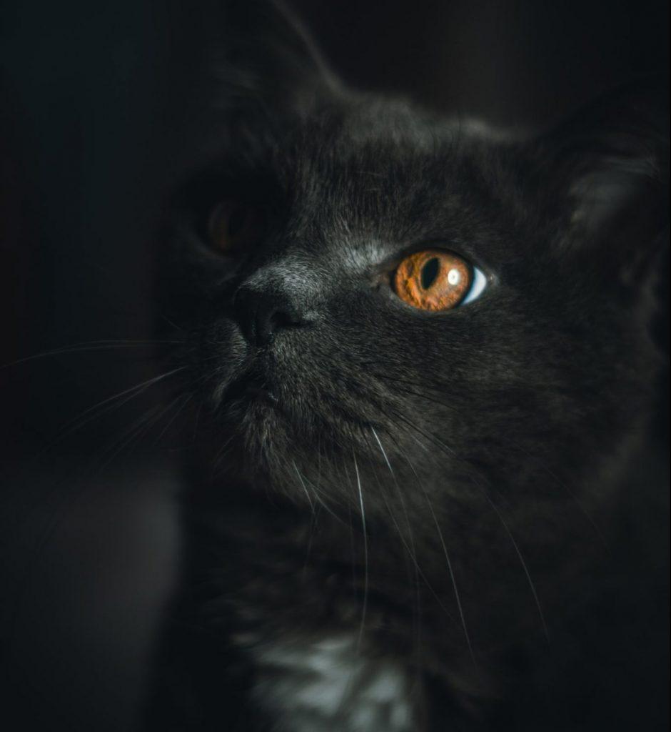 chat dans la pénombre