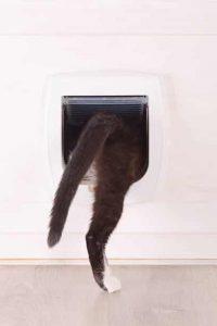 chat qui entre dans la chatière
