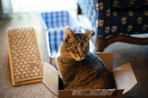 Pourquoi les chats aiment-ils se mettre dans des cartons ?