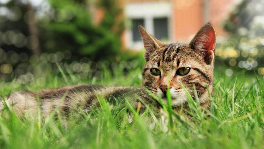 chat a l'exterieur