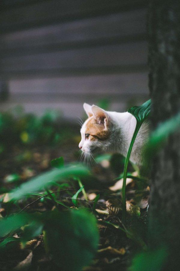 Le chat à l'extérieur : 10 précautions à prendre