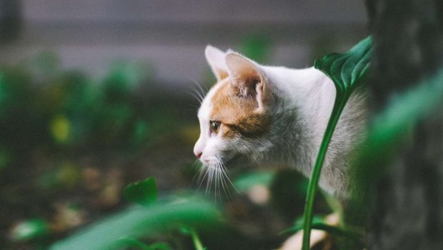 Le chat à l'extérieur : 10 précautions