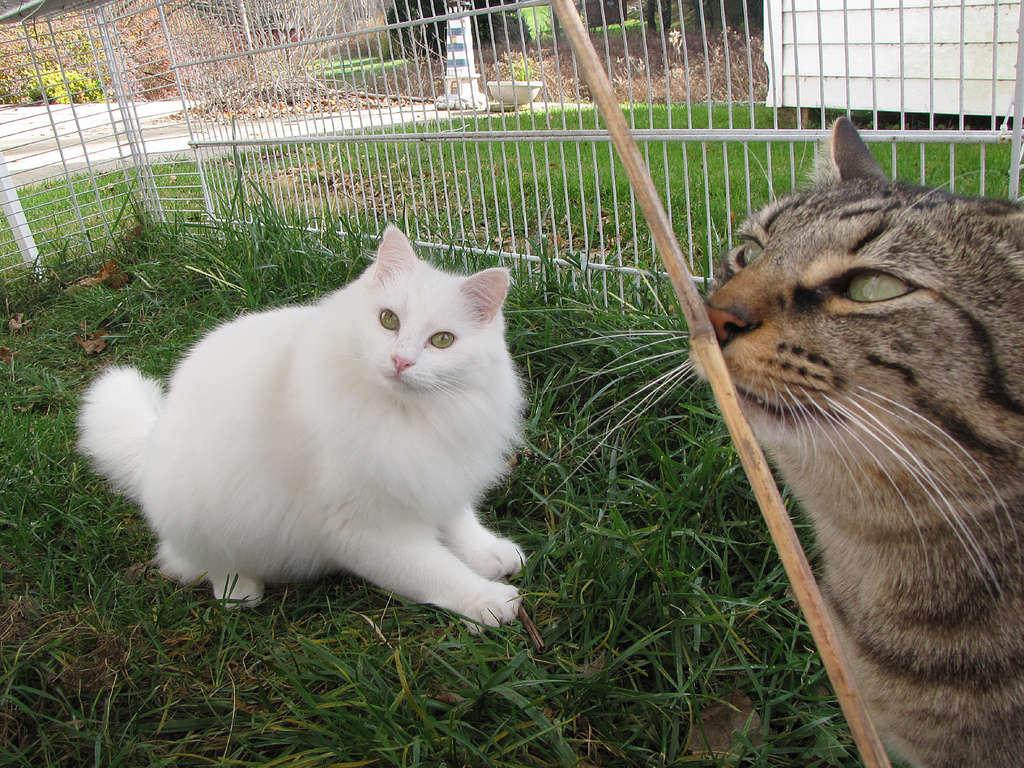 chat dans un enclos extérieur