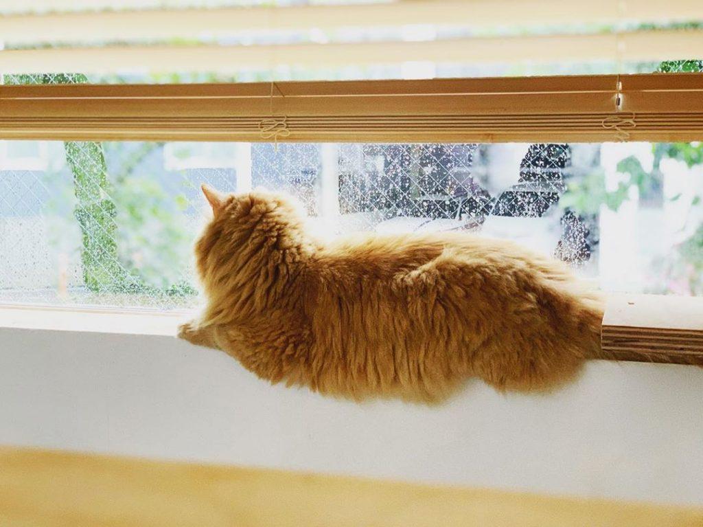 chat rebord fenêtre