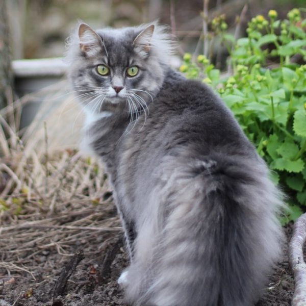 Répulsifs naturels pour chat