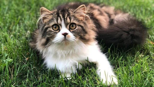 Conseils pour adopter un chat