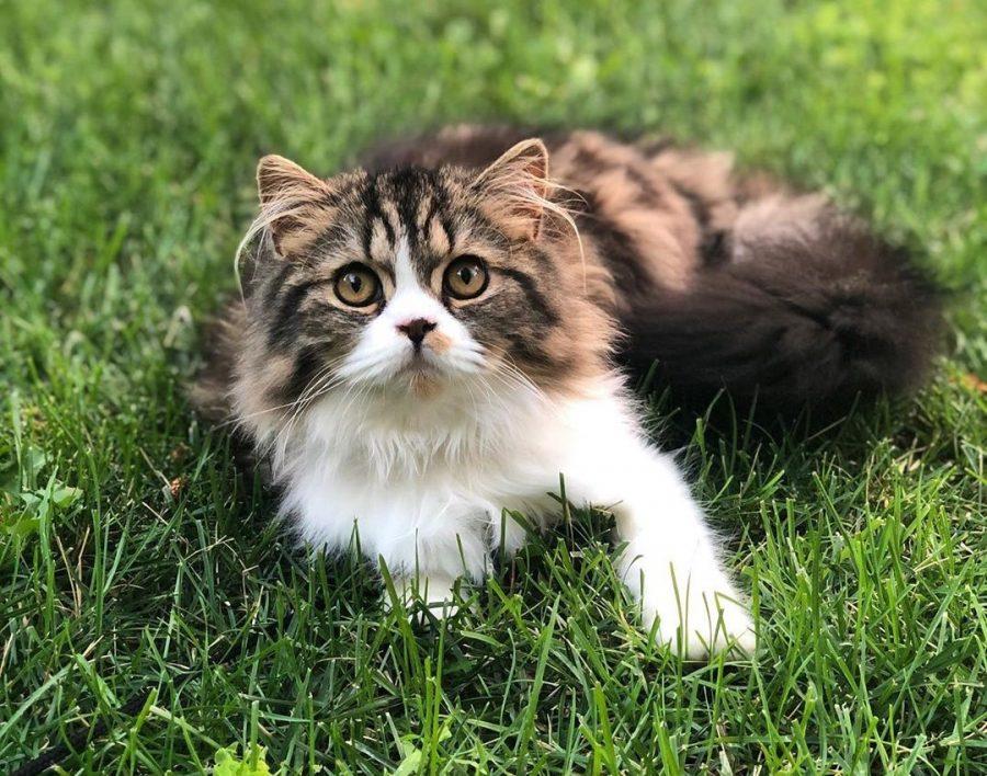 Adopter un chat : 10 choses à savoir