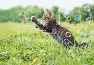 jeu bulles chat