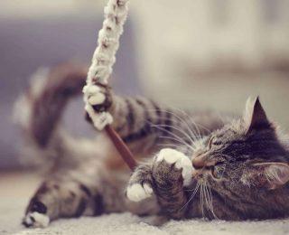 Des idées de jouets pour son chat
